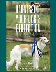 A beautiful white and tan Saluki dog stands on grass wearing a royal blue Tellington TTouch Harmony Harness.