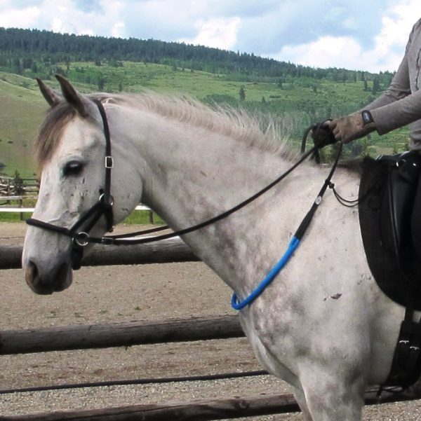A grey horse wears a blue balance rein
