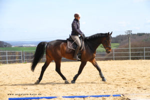 A woman rides a bay horse with a TTouch Balance rein
