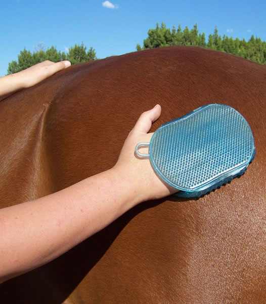 Jelly scrubber being used on a bay horse
