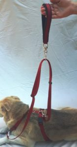 Sliding leash and handle with the Harmony Harness System.