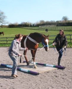 Leading a horse with the tellington ttouch homing pigeon