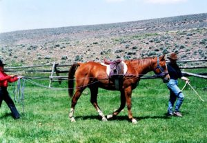 A young horse is ground driven using tellington ttouch at bitterroot ranch