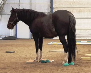A horse stands on a surefoot stability program pad